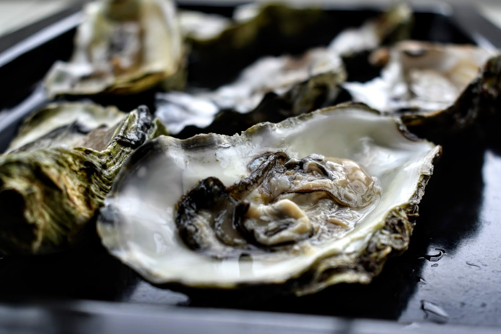 Quickly Baked Giga Oysters from Limfjord (Denmark) and Italian Wines